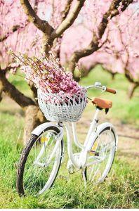Spring Inspiration